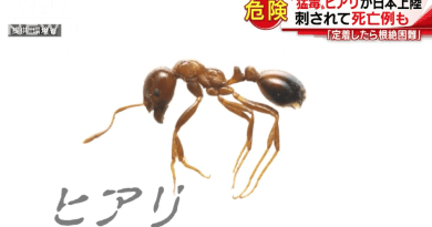 FIRE ANT IS FOUND IN CONTAINER FROM CHINA