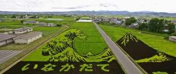 Inakadate: los bellos arrozales de Japón