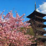 Japón y la flor del ciruelo