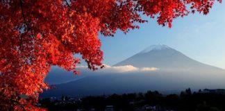 Viajar a Japón en otoño: predicciones de enrojecimiento de los árboles