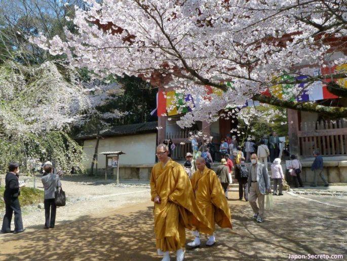 Templo Daigoji (Kioto) en plena floración del sakura
