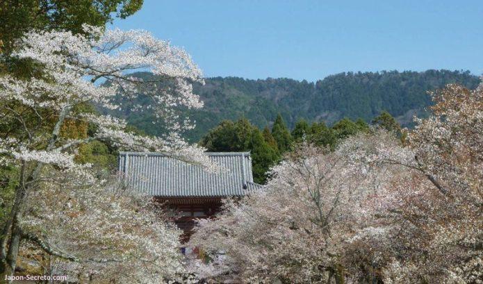 Lugares secretos de Japón en los que disfrutar de los cerezos (sakura) en flor: el templo Daigoji de Kioto