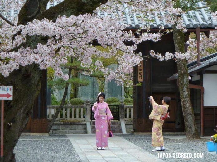 Primavera en Japón: cerezos en flor en Kioto