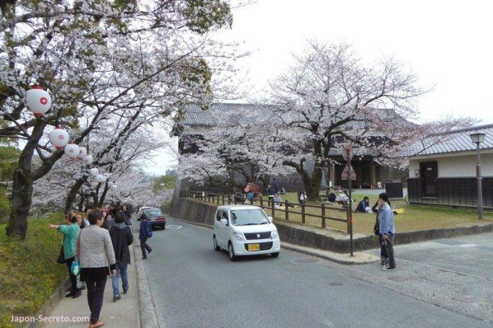 Lugares secretos de Japón en los que disfrutar de los cerezos (sakura) en flor: el castillo de Kumamoto