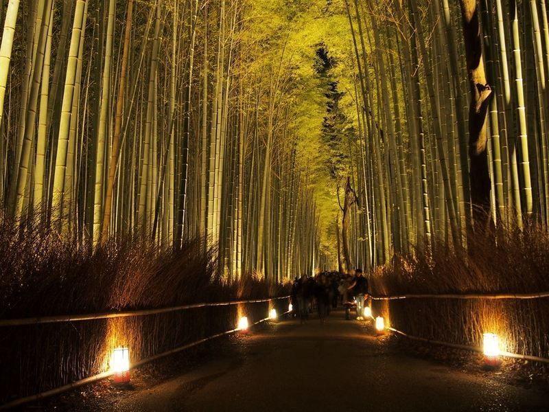 Arashiyama Hanatouro @ Parque Nakanoshima | Kyoto | Kyoto Prefecture | Japón
