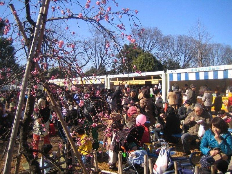 Festival de los Ciruelos de Setagaya @ Parque Hanegi | Setagaya-ku | Tōkyō-to | Japón