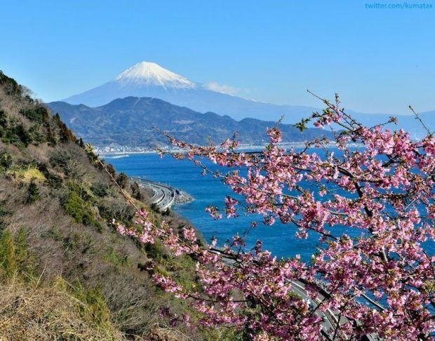 Ciruelos en flor en Japón