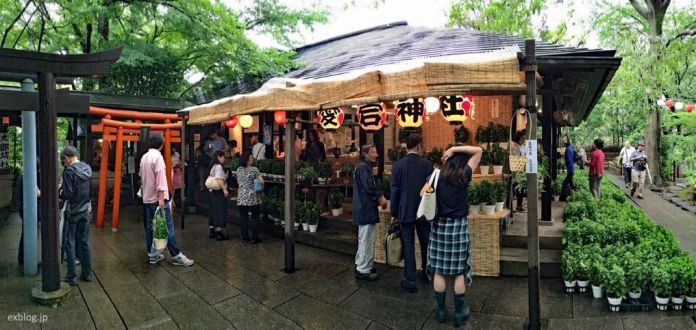 Festivales de Japón: Sennichi Mairi Houzuki Ennichi de Tokio, el primer mercado de farolillos japoneses y un ritual de bienvenida del verano