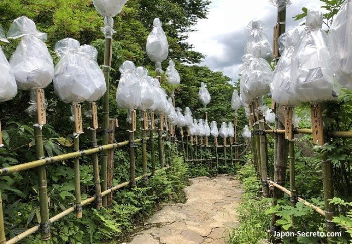 Japón. Ruta de peregrinación Dewa Sanzan. Monte Yudono (Yudonosan). Lugar sagrado. Camino a Yudonosan Jinja