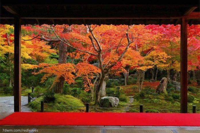 Japón: disfrutar del momiji en Kioto en otoño. Templo Enkoji