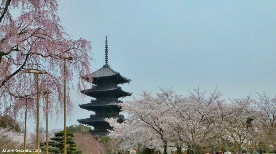 Templos de Kioto: Tōji (東寺). La pagoda más alta de Japón. Cerezos en flor. Primavera en Japón