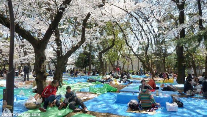 Hanami en el parque de Ueno. Flores de cerezo en Tokio. Sakura.