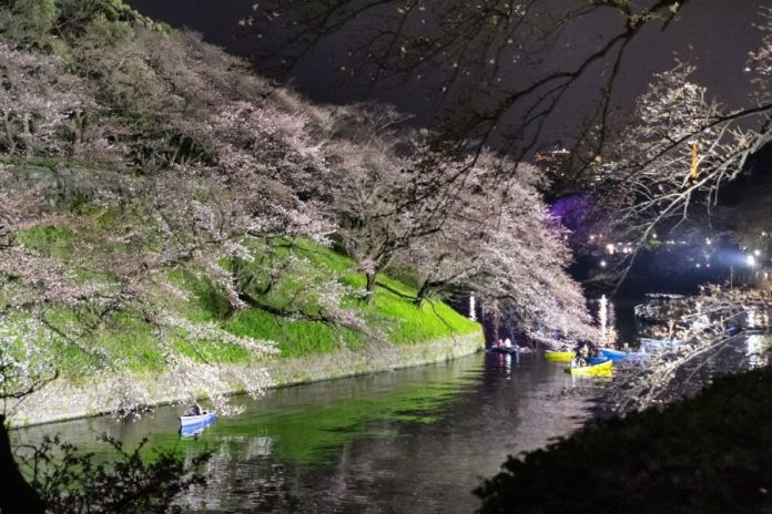 Chidorigafuchi iluminación de noche. Ver flores de cerezo o sakura en Tokio. Primavera.