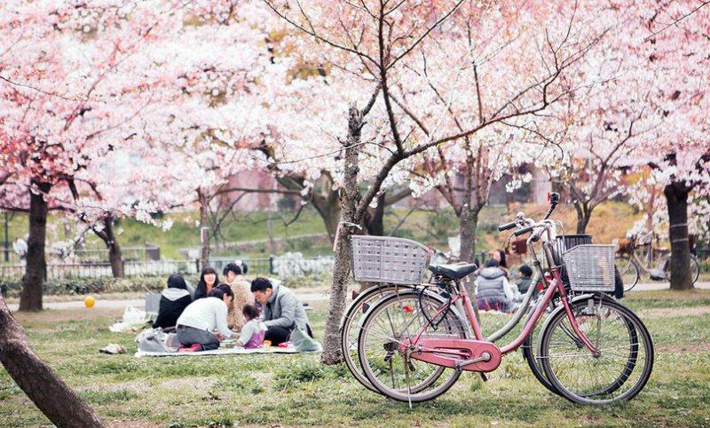 clima primavera hanami
