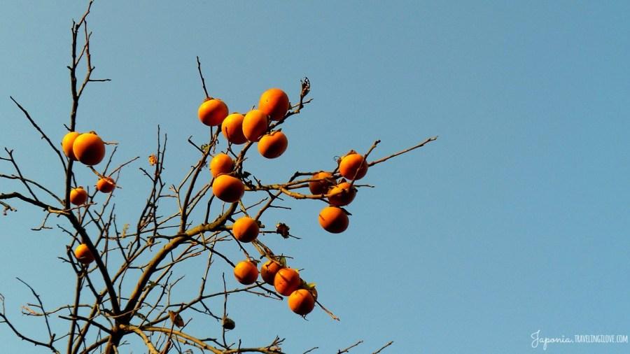 7. Kaki. Owoce jesieni
