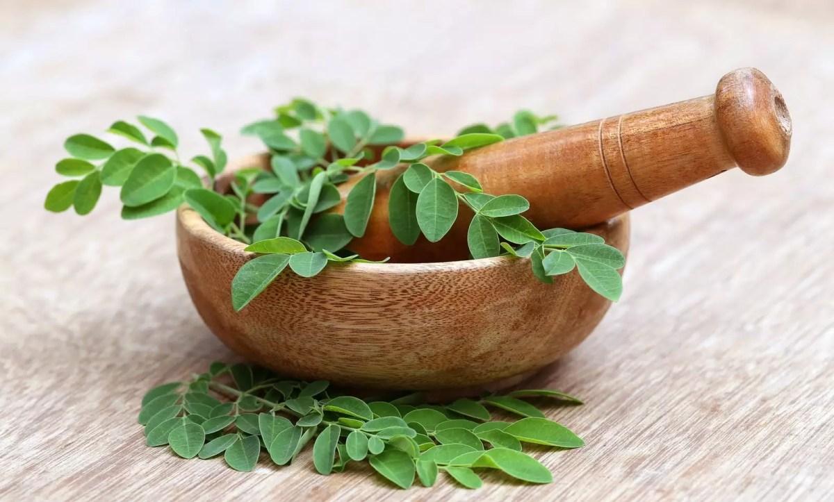 Conheça a moringa – uma planta super nutritiva!