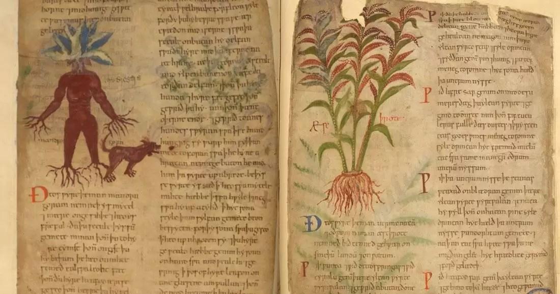 Livro de ervas medicinais de 1000 anos disponível online