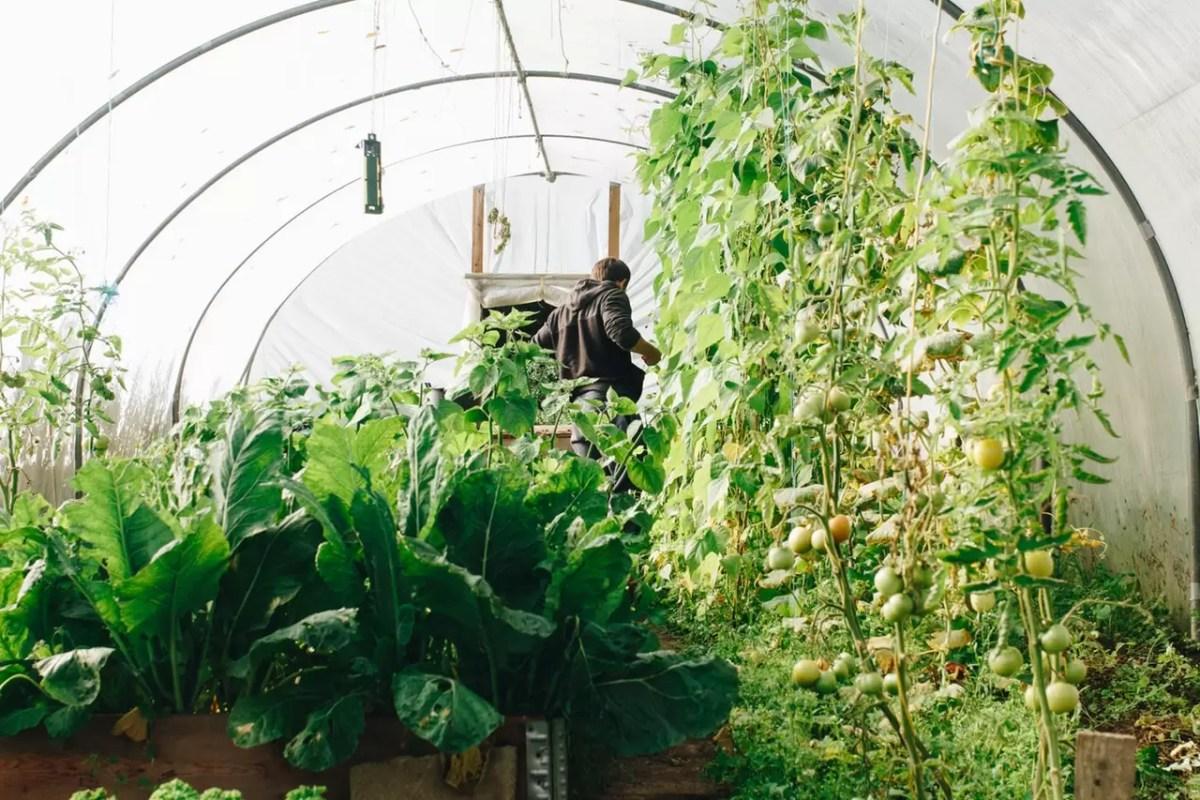plantas antagônicas e companheiras