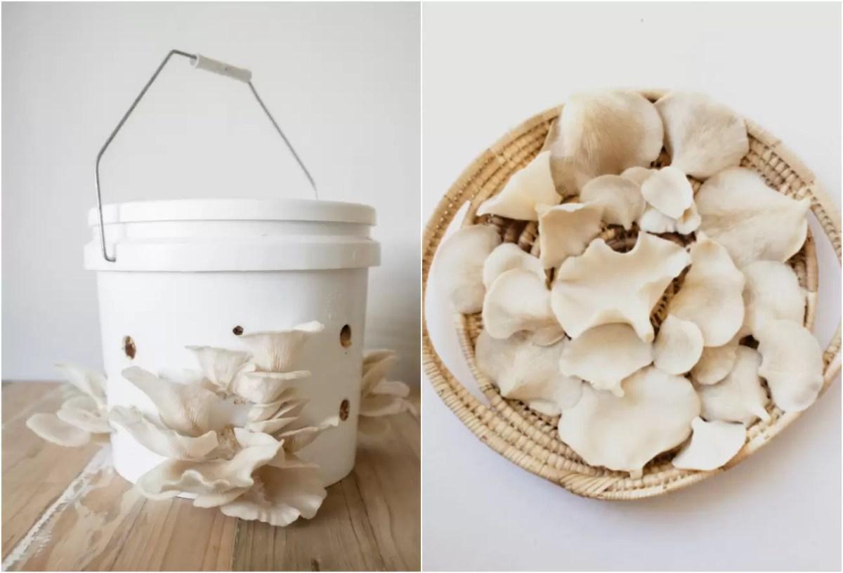 Como cultivar cogumelos em casa