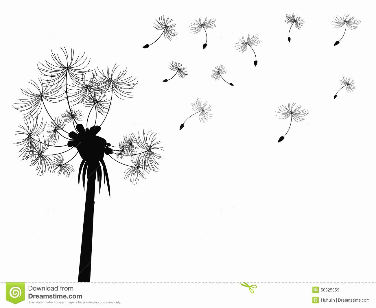 Dessin Fleur Noir Et Blanc Beau Fond De Vol De Pissenlit