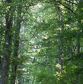 jardin de soin : la nature contribue à un état physiologique de bien-être,diminue le stress, l'anxiété, la douleur.