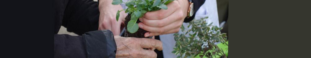 jardinage-therapeutique-hortitherapie