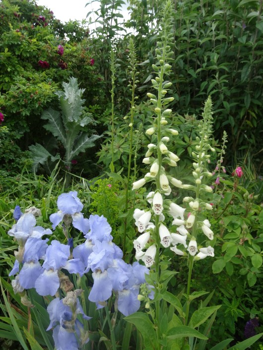 How to use Blue in a garden