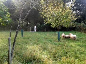 mantenimiento-jardin-zubieta-20141007_101310