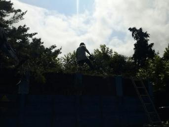 gardening services in Donostia