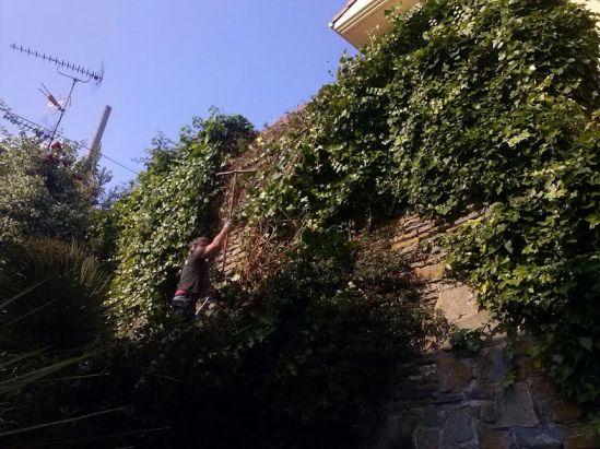trabajos de jardineria en Aldapeta