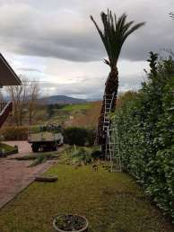Tala de palmera en Oriamendi