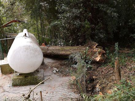 retirada de arbol caido en Donostia