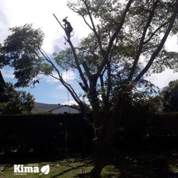 acacia-constantinopla-Urruña