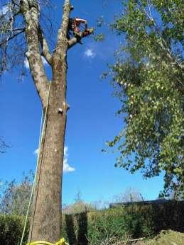 Poda-y-tala-de-arboles-secos-en-Zubieta-3-1