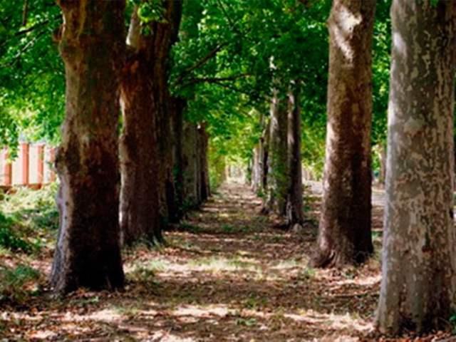 Los desafíos de ser paisajista en España