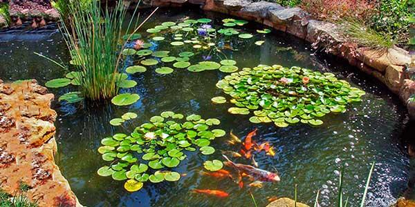 El estanque perfecto