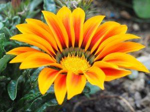 jardines sostenibles flores