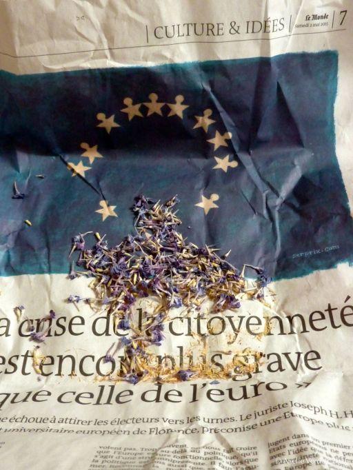 bleuet_AV