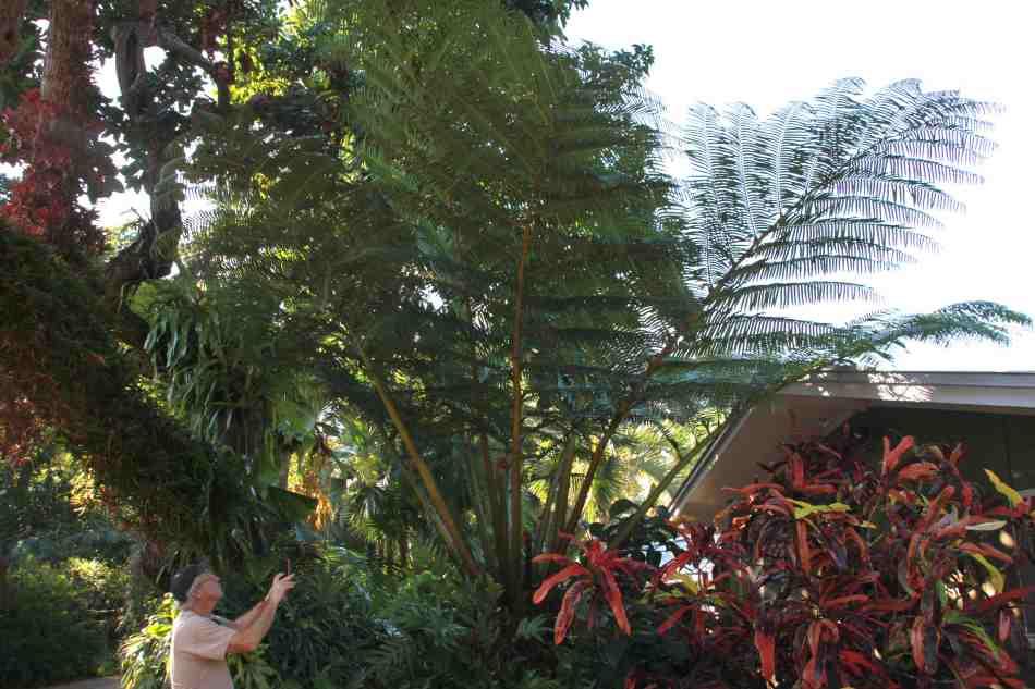 img_2462angiopteris-palmiformis
