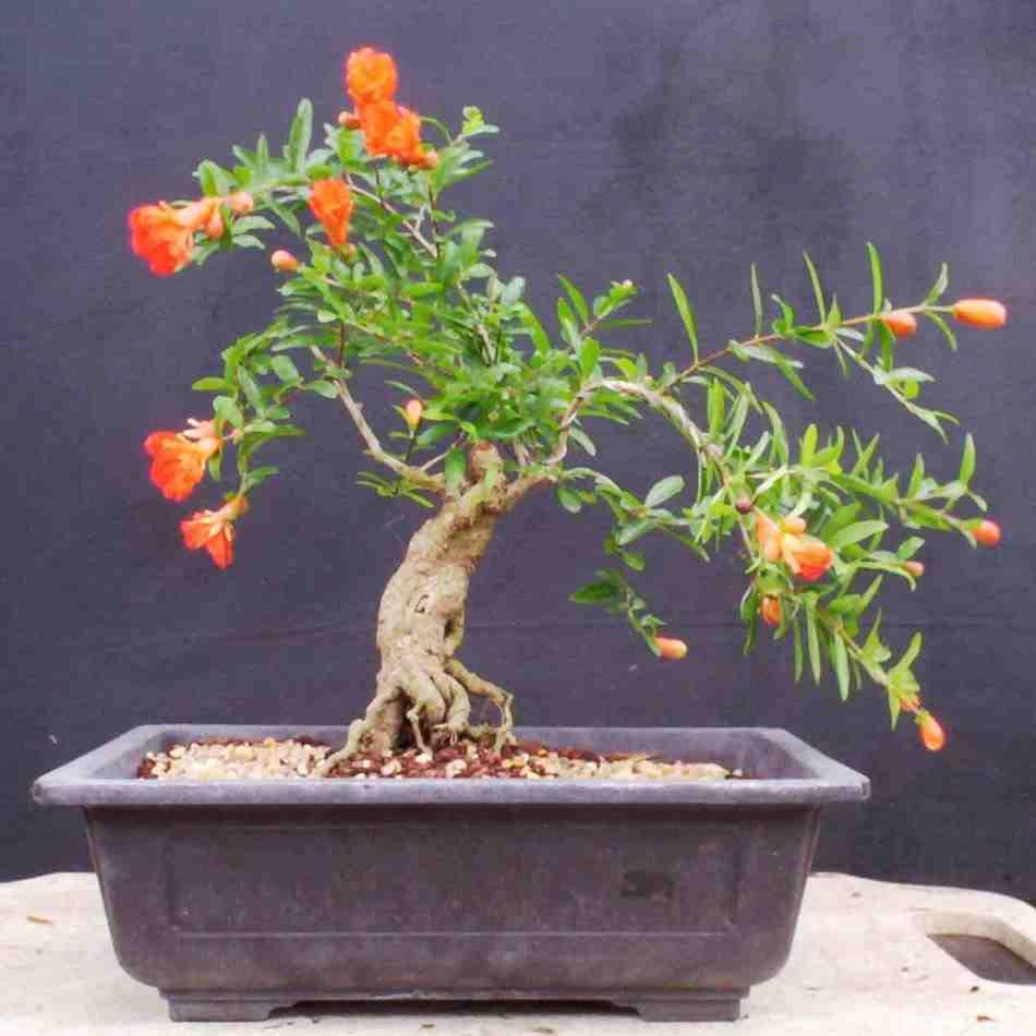 20180216D bonsaibeginnings.blogspot.ca.jpg