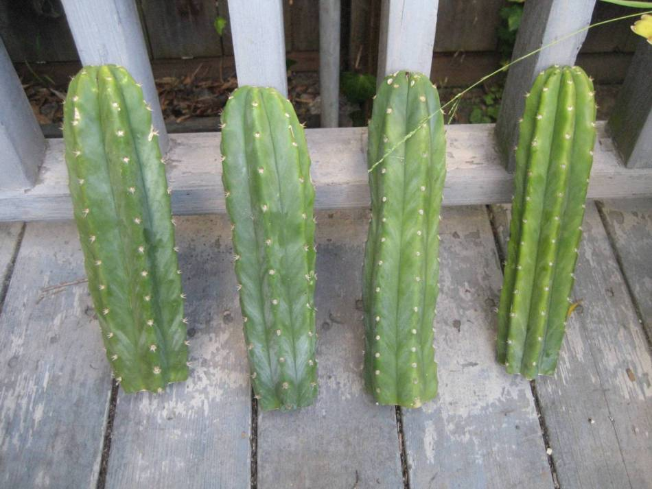 Astuccio da cucito Vera cactus Derri/ère la Porte motivo