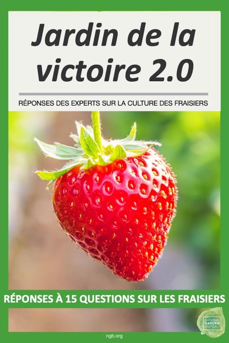 Réponses à 15 questions sur la culture des fraisiers