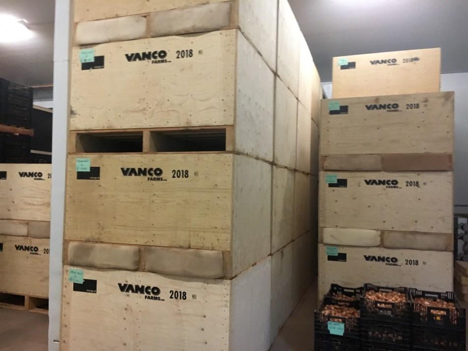 Caisses de bois de bulbes de tulipe imprimés VanCo Farms