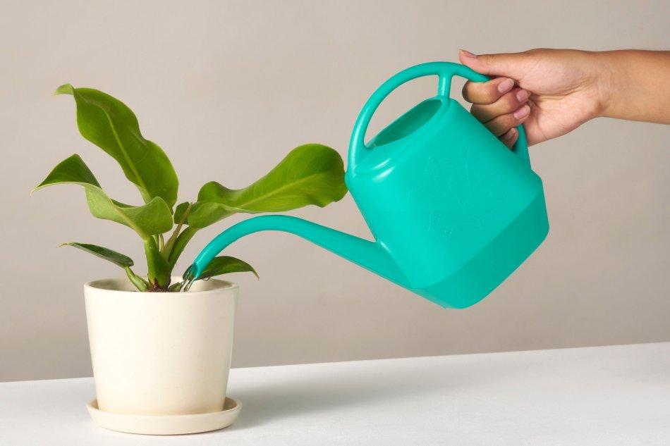 Arrosoir qui verse l'eau dans un pot.