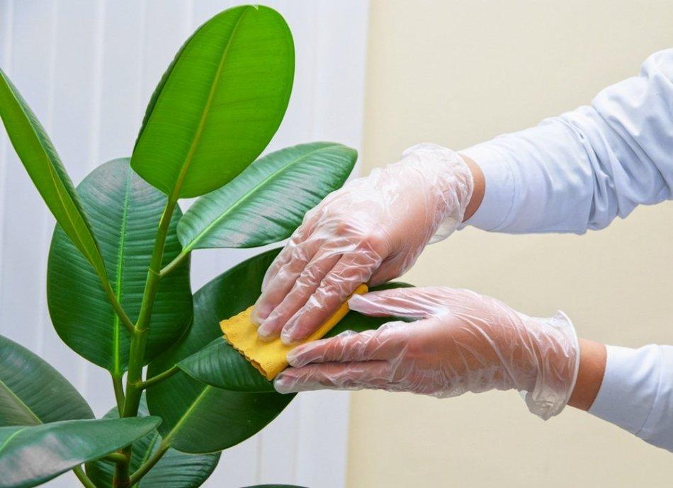 Mains qui lavent une plante.