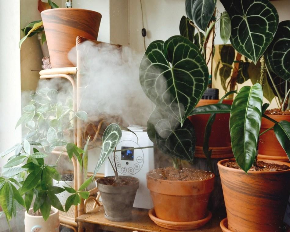 Brume dégagé par un humidificateur dans une étagère de plantes.