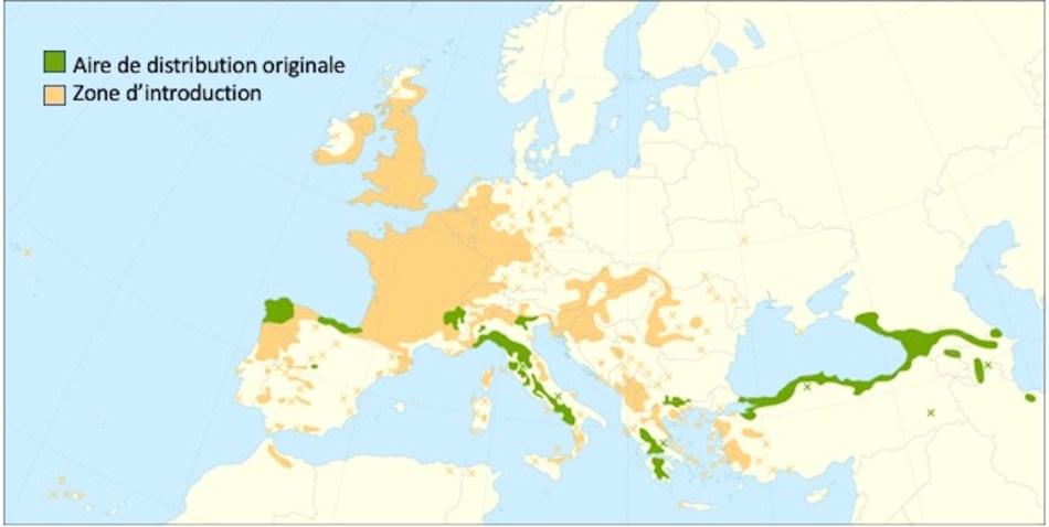 Carte montrant la distribution du Châtaignier d'Europe.