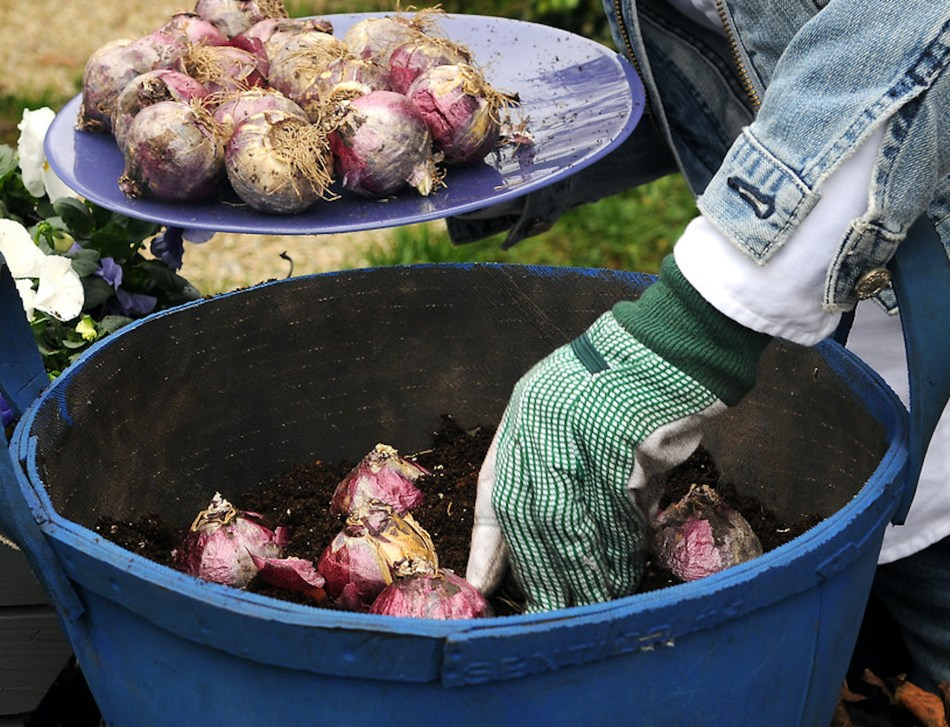Empotager de bulbes de jarcinthe