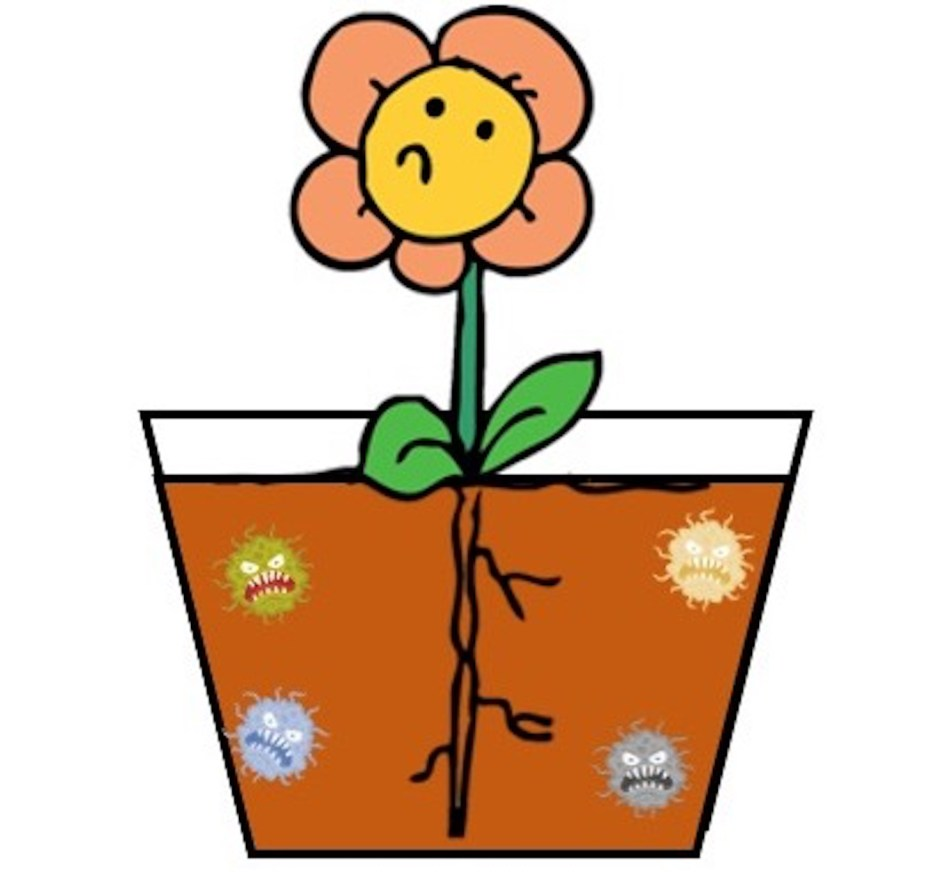Petite plante dans un grand pot avec peu de racines; des microbes méchants se développent tout autour.