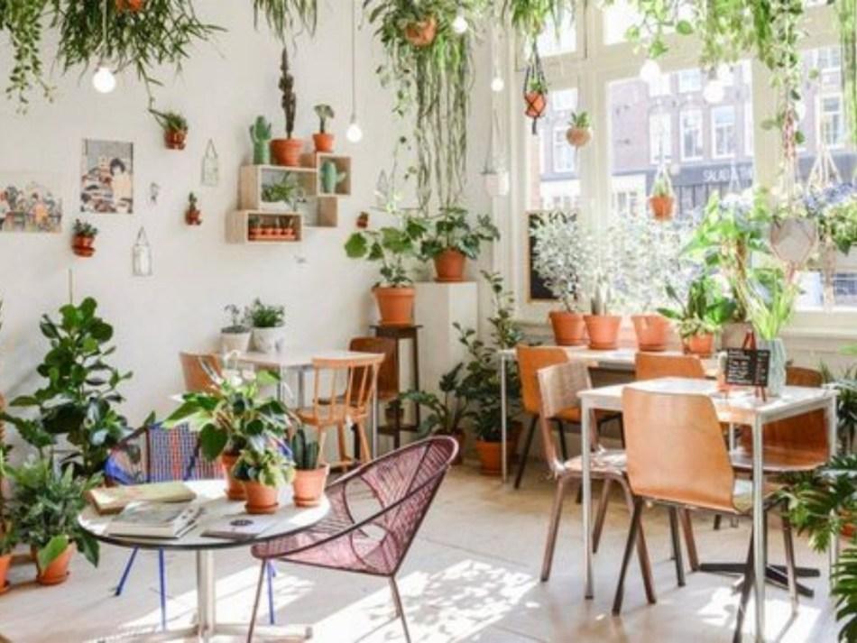 Pièce avec beaucoup de plantes d'intérieur